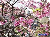 20200212台北內湖樂活夜櫻季:萬花筒2樂活公園.jpg