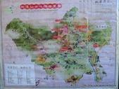 20120107桃源仙谷鬱金花嬌:P1320138.JPG