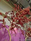 20110411&爭艷館~台灣花卉展:P1100918.JPG