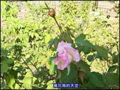 20191110台北新生公園台北玫瑰園秋季玫瑰展:萬花筒1玫瑰.jpg