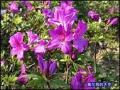 20200316台北杜鵑花季:萬花筒29大安杜鵑花.jpg