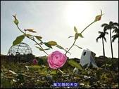 20191110台北新生公園台北玫瑰園秋季玫瑰展:萬花筒3玫瑰.jpg