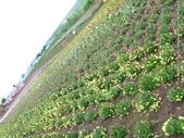 20110714四季彩之丘:P1180158.JPG