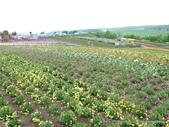 20110714四季彩之丘:P1180159.JPG