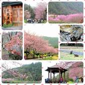 20170225台中武陵農場賞櫻趣:IMG_20170227_1806_27.jpg