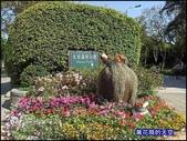 20200316台北杜鵑花季:萬花筒2大安杜鵑花.jpg