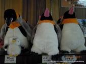 20110713北海道旭川市旭山動物園:DSCN9855.JPG