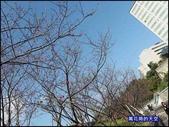 20200212台北內湖樂活夜櫻季:萬花筒8樂活公園.jpg