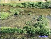 20200212台北內湖樂活夜櫻季:萬花筒9樂活公園.jpg