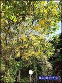 20200705桃園大溪南法玫瑰園:萬花筒J13番鴨.jpg