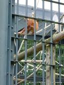 20110713北海道旭川市旭山動物園:P1170098.JPG