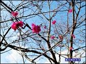 20200212台北內湖樂活夜櫻季:萬花筒10樂活公園.jpg
