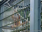 20110713北海道旭川市旭山動物園:P1170099.JPG