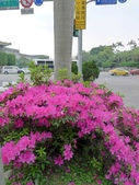20140319熊貓世界之旅中正紀念堂站:P1810355.JPG