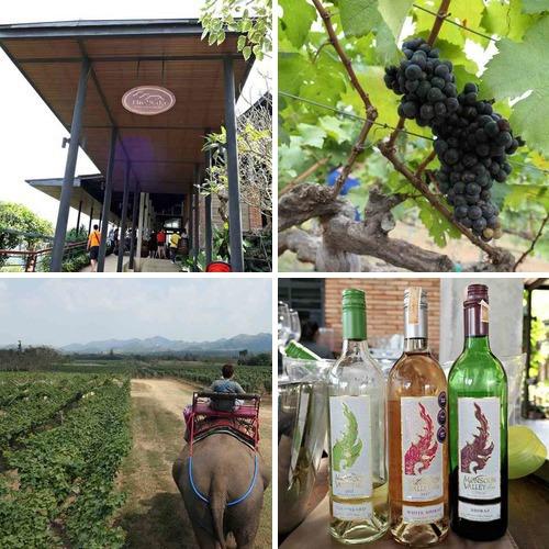相簿封面 - 20190204泰國華欣Monsoon Valley Wineyard