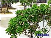 20200820台南河樂廣場:萬花筒台南A23.jpg