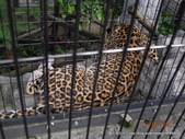 20110713北海道旭川市旭山動物園:DSCN0028.jpg