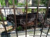 20110713北海道旭川市旭山動物園:P1170301.JPG