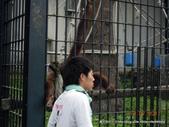 20110713北海道旭川市旭山動物園:DSCN9970.jpg