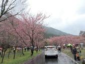 20170225台中武陵農場賞櫻趣:DSCN4295.JPG