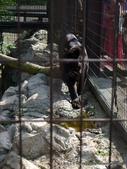 20110713北海道旭川市旭山動物園:P1170302.JPG