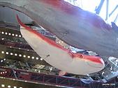 20090817奈京阪第三天:IMG_8281.JPG