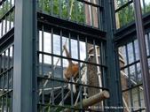 20110713北海道旭川市旭山動物園:P1170106.JPG
