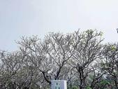 20180214泰國七岩拷汪宮(Phra Nakhon Khiri Palace):20180214泰國一33.jpg