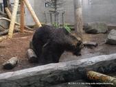 20110713北海道旭川市旭山動物園:DSCN0034.jpg