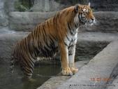 20110713北海道旭川市旭山動物園:DSCN0036.jpg