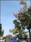 20191110台北新生公園台北玫瑰園秋季玫瑰展:萬花筒84玫瑰.jpg