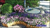 20200316台北杜鵑花季:萬花筒7大安杜鵑花.jpg