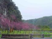 20170225台中武陵農場賞櫻趣:P2370590.JPG