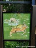 20110713北海道旭川市旭山動物園:P1170277.JPG