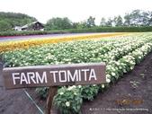 20110714富良野富田農場:DSCN0226.JPG