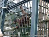 20110713北海道旭川市旭山動物園:P1170113.JPG