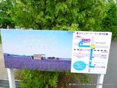 20110714富良野富田農場:P1180279.JPG