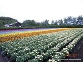 20110714富良野富田農場:DSCN0227.JPG