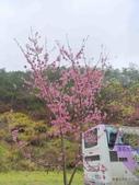 20170225台中武陵農場賞櫻趣:P2370624.JPG
