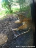 20110713北海道旭川市旭山動物園:P1170278.JPG