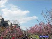 20200212台北內湖樂活夜櫻季:萬花筒3樂活公園.jpg