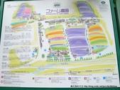 20110714富良野富田農場:P1180280.JPG