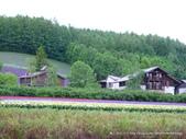20110714富良野富田農場:P1180281.JPG