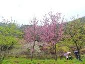20170225台中武陵農場賞櫻趣:P2370627.JPG