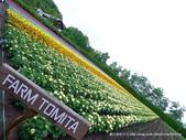 20110714富良野富田農場:P1180283.JPG