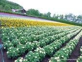 20110714富良野富田農場:P1180284.JPG
