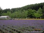 20110714富良野富田農場:DSCN0232.JPG