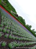 20110714富良野富田農場:P1180285.JPG