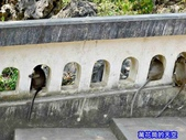 20180214泰國七岩拷龍穴(Tham Khao Luang/ Khao Luang Cave):20180214泰國102.jpg