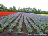 20110714富良野富田農場:P1180286.JPG